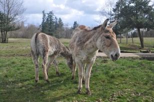 donkey-1338236